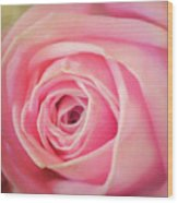 Carolina Rose Wood Print