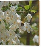 Carolina Silverbell And Bee Wood Print