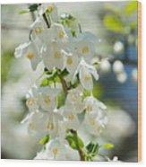 Carolina Silverbells In Spring Wood Print