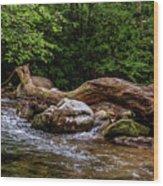 Carolina Stream Wood Print