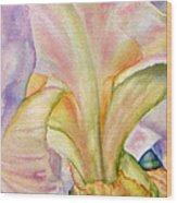 Carols-iris-ii Wood Print