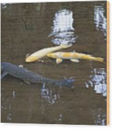 Carp Wood Print