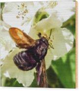 Carpenter Bee Wood Print