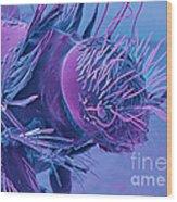 Carpet Beetle Larva, Sem Wood Print