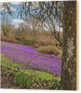 Carpet Of Purple Crocus Wood Print