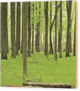 Carpeted Forest Wood Print