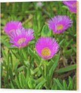 Carpobrotus Edulis Pink Ice Plant Wood Print