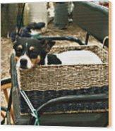 Carriage Dog Wood Print