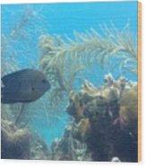 Carribean Sea Life Wood Print