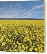 Carrizo Plain Desert Sunflower Field Afternoon Wood Print
