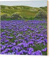 Carrizo Plain National Monument Wildflowers Wood Print