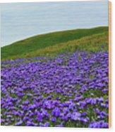 Carrizo Plain Phacelia Wood Print