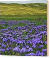 Carrizo Plain Wildflowers Wood Print