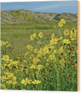 Carrizo Plain Yellow Daisies Wood Print