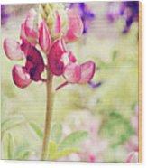 Carte Postale Red Bluebonnet Wood Print