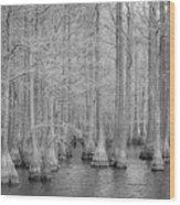 Carvers Cypress Ir Wood Print