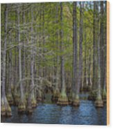 Carvers Cypress Wood Print