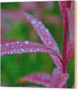 Cascade Autumn Leafs 10 Wood Print