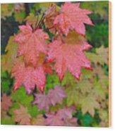 Cascade Autumn Leafs 4 Wood Print