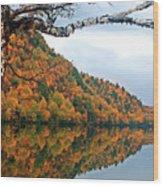 Cascade Birch Wood Print