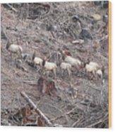 Cascade Elk Wood Print