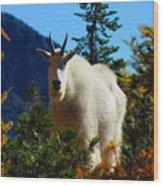 Cascade Range Mountain Goat Wood Print
