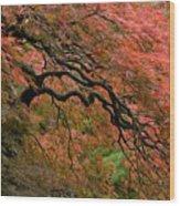 Cascading Japanese Maple Wood Print