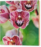 Cascading Miniature Orchids Wood Print