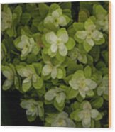 Cascading White Blossoms 2 Wood Print