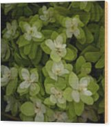 Cascading White Blossoms 3 Wood Print