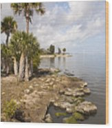 Castaway Point On The Indian River Lagoon With Coquina Rock Wood Print