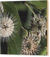 Casting Seeds Wood Print