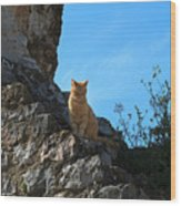 Castle Cat Wood Print