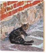 Cat Against Stone Wood Print