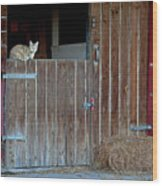 Cat And Barn Wood Print