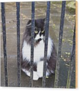 Cat At The Gate Wood Print