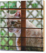 Cat At The Window Wood Print