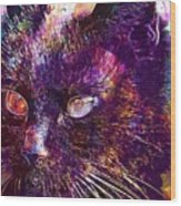 Cat Black View Close  Wood Print