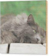 Cat Chillax Wood Print