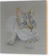 cat drawing - Jackson Wood Print