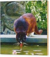 Cat Drinking In Picturesque Garden Wood Print