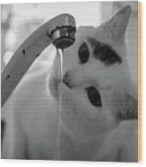 Cat Drinking Water From Faucet Wood Print by A*k