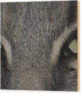 Cat Eyes 2 Wood Print
