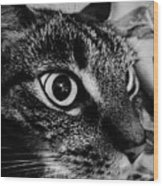 Cat Eyes Wood Print