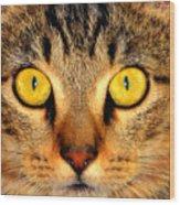 Cat Face Portraiture Wood Print