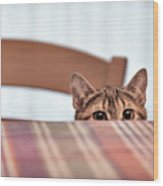 Cat Hiding Under The Table Wood Print