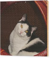 Cat In A Basket Wood Print