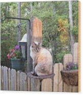 Cat In A Birdbath Wood Print