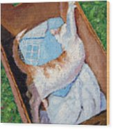 Cat In A Box Wood Print