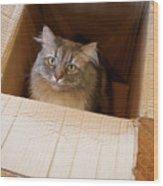 Cat In A Box Wood Print